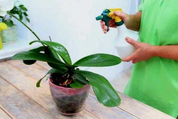 opryskivanie orhidei
