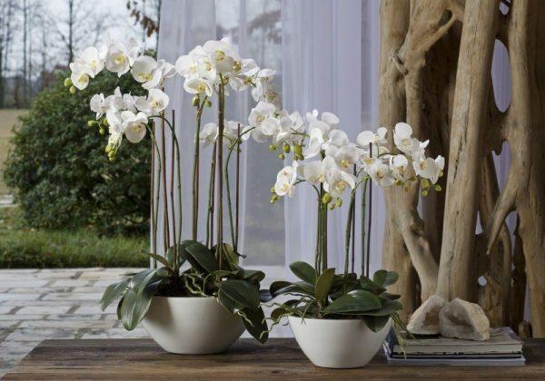 Кашпо под орхидеи