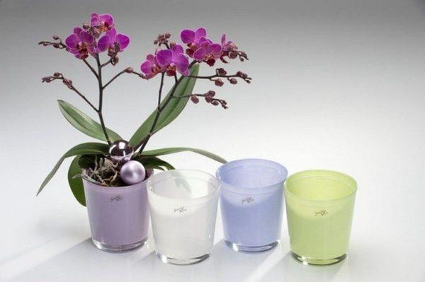 Какой должен быть горшок для орхидеи и фото правильных пластиковых емкостей, которые лучше подойдут для выращивания нескольких растений, а также нужны ли в них отверстия