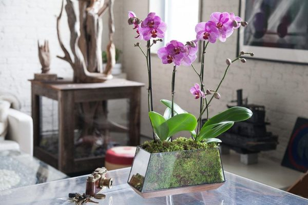 orhidei v stekle