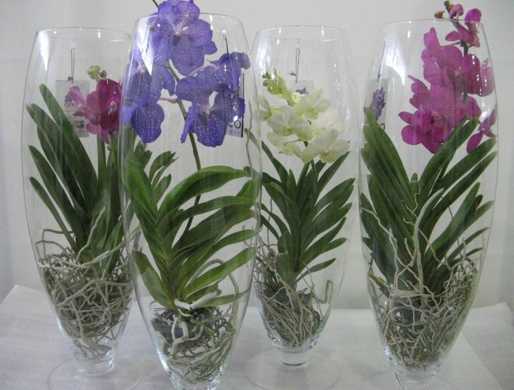 Орхидеи в стеклянной вазе
