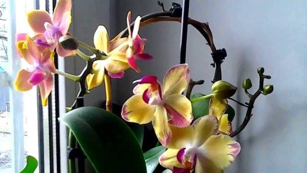 osveschenie dlja orhidei