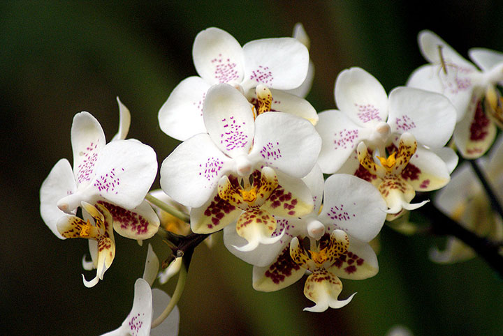 Уход За Орхидей