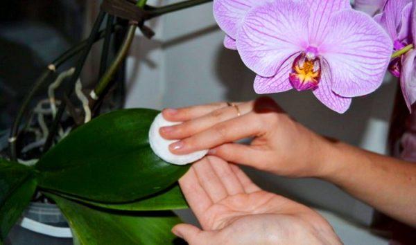 protiranie orhidei