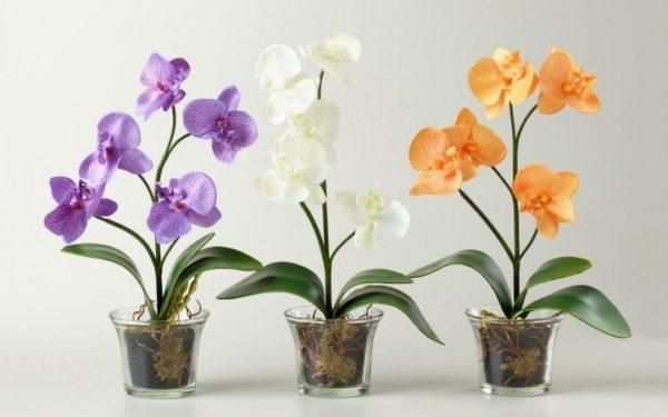 Как пересаживать цветущую орхидею в домашних условиях