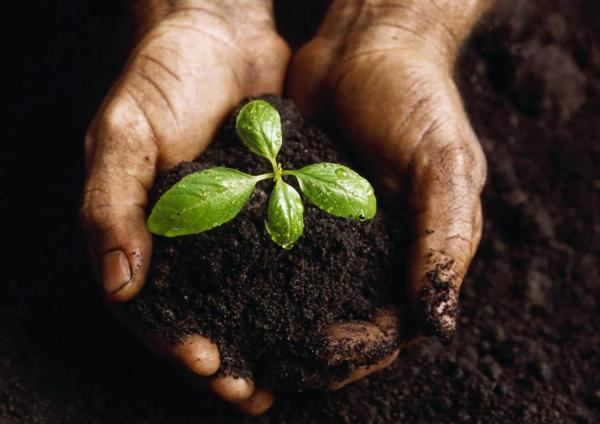 Удобрение биогумус: что это такое, инструкция по применению, как сделать в домашних условиях