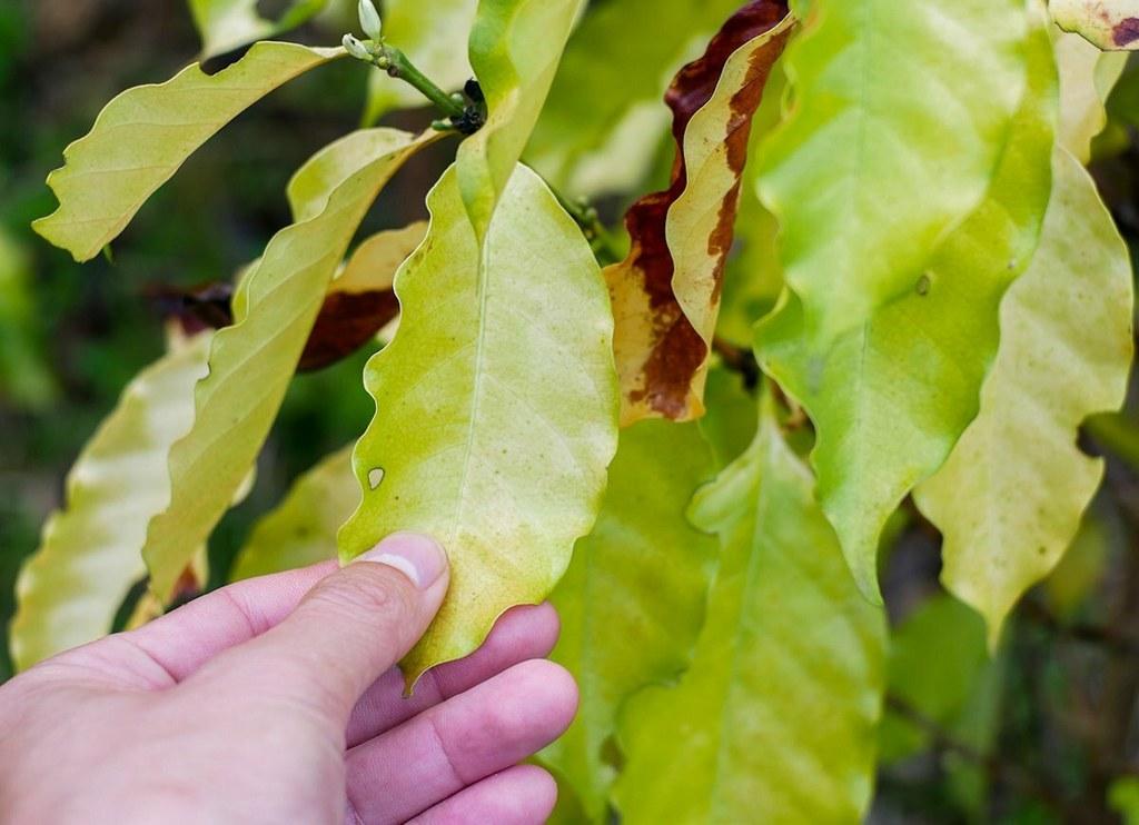 листва дерева