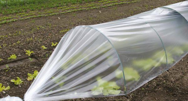парник из пластиковых дуг