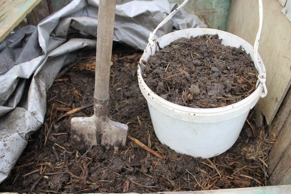 Подкормка огурцов куриным пометом в теплице и открытом грунте