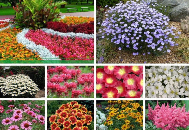 sadovye cvety