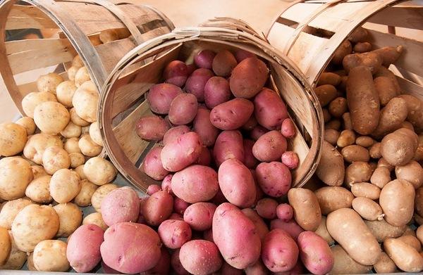 список сортов картофеля с названием