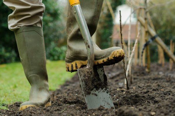 Обработка сада осенью от болезней и вредителей