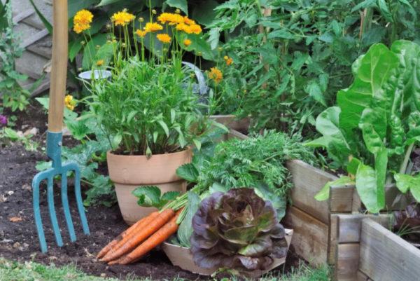 Лунный календарь на ноябрь 2020 года садовода и огородника, цветовода