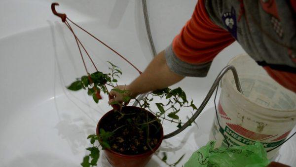 обработка растения