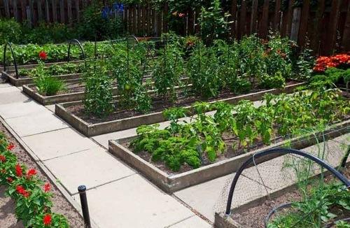 Что с чем можно сажать рядом в огороде на грядке, в теплице?