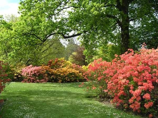 Лунный календарь на сентябрь 2020 года садовода и огородника, цветовода