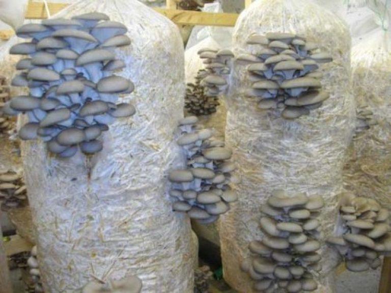 Как посадить грибы осенью на даче