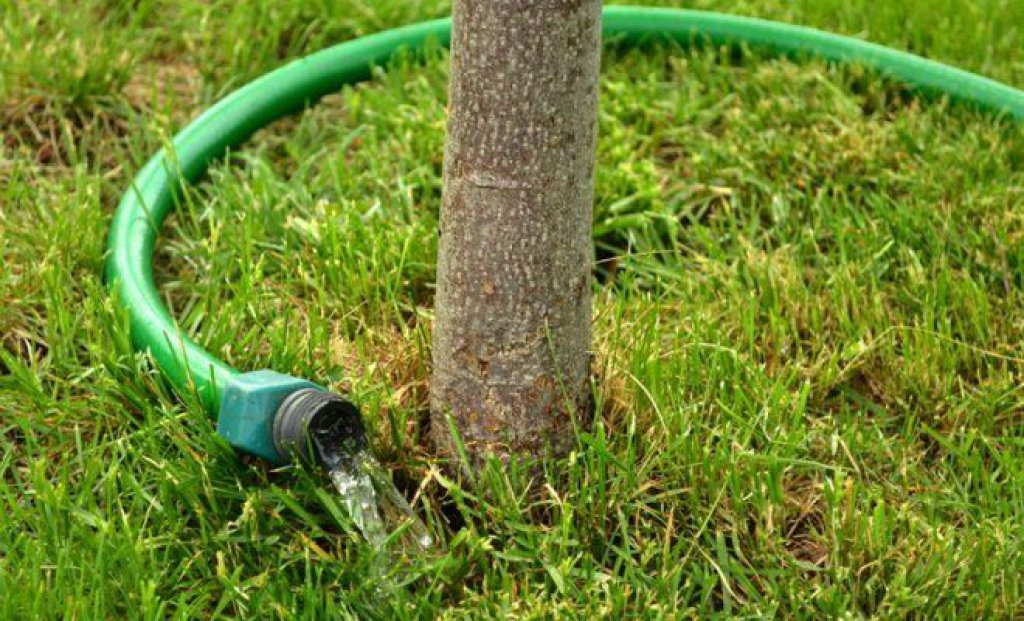 Влагозарядный полив дерева