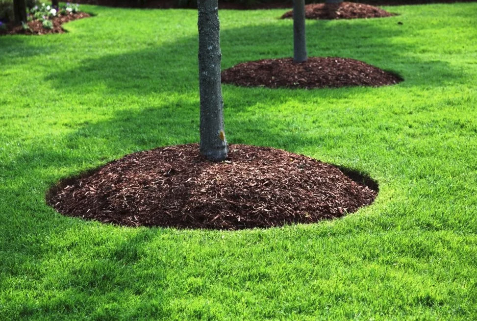 Приствольные круги деревьев