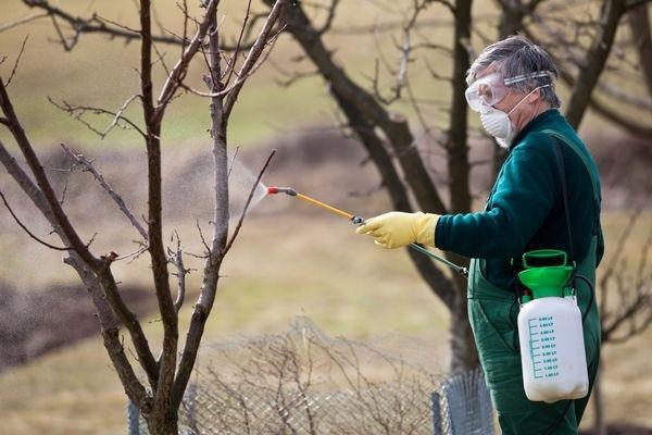 Как ухаживать за персиком осенью
