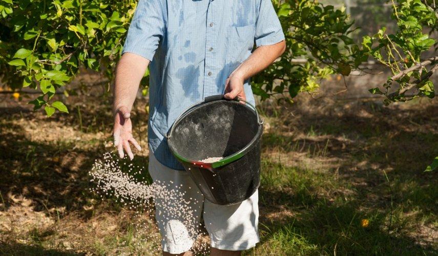 Подкормка груши весной чтобы был хороший урожай: во время цветения и плодоношения, схема, фото