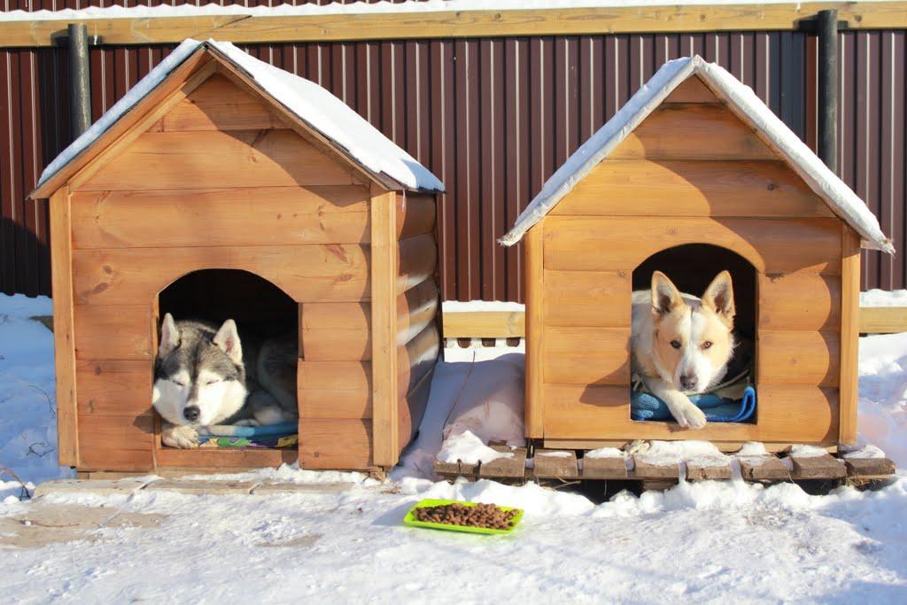 Теплая конура для собаки: полезные советы по утеплению будки