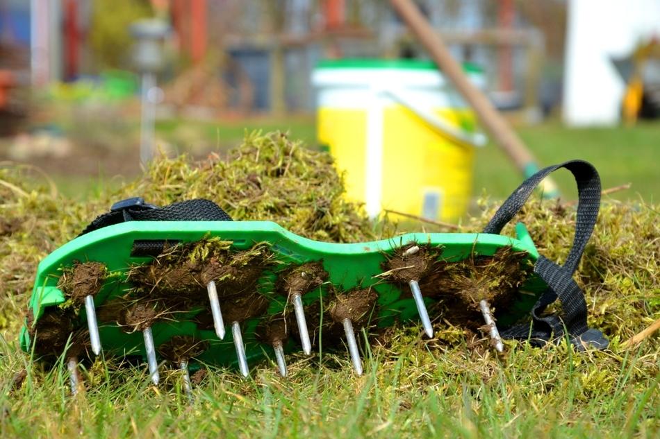 Гланвые правила ухода за газоном осенью с целью повышения его качества