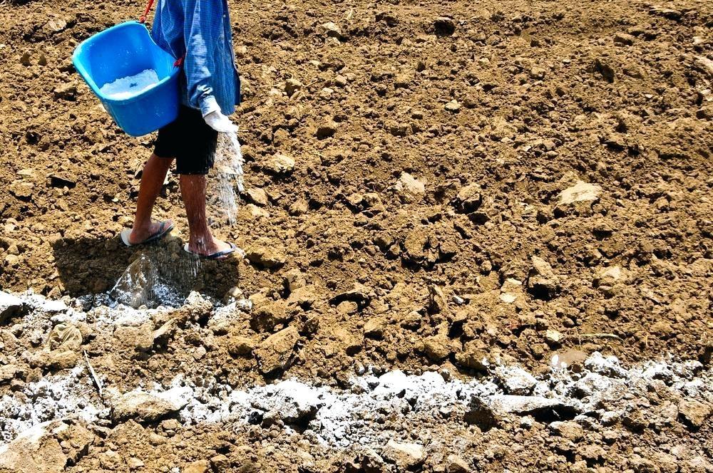 как производят известкование почвы
