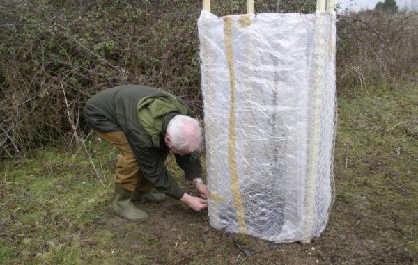 Как укрыть персик на зиму и уберечь его от морозов