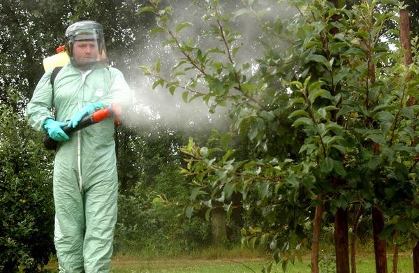 Обработка слив весной от вредителей и болезней