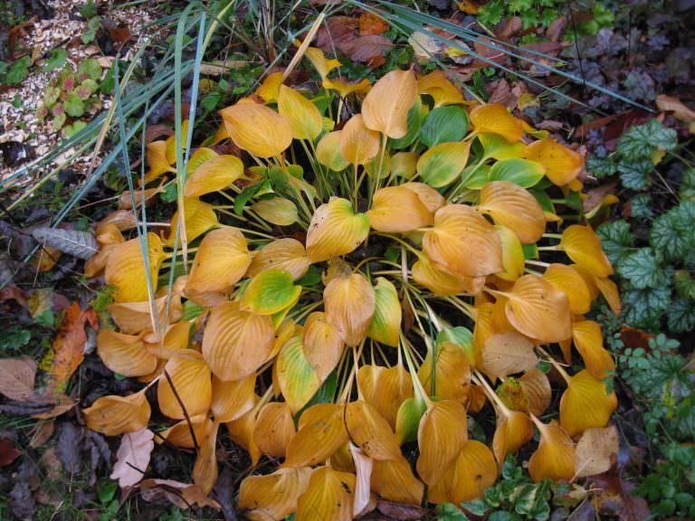 Осенняя подготовка хосты