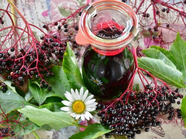 Арония черноплодная лечебные свойства и противопоказания