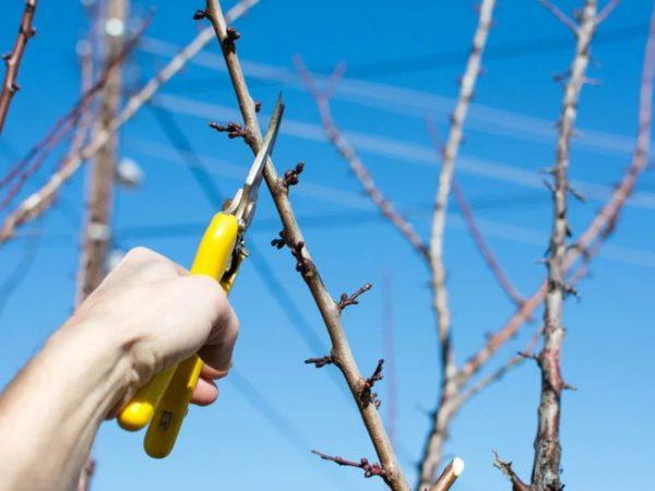 Способы увеличение плодоношения