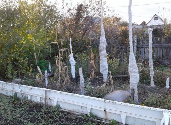 Укрытие деревьев