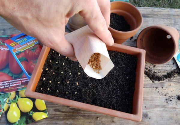 Сеют семенной материал на рассаду