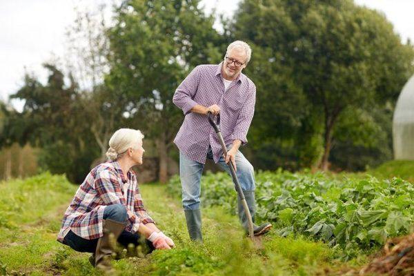 Почему пенсионеры не бросают огороды