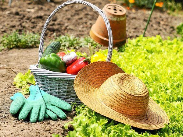 Посевной лунный календарь огородника для Украины