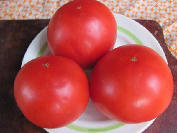 Томаты для Ростовской области: семена, лучшие сорта для открытого грунта