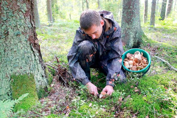 Есть ли сейчас грибы по киевскому шоссе