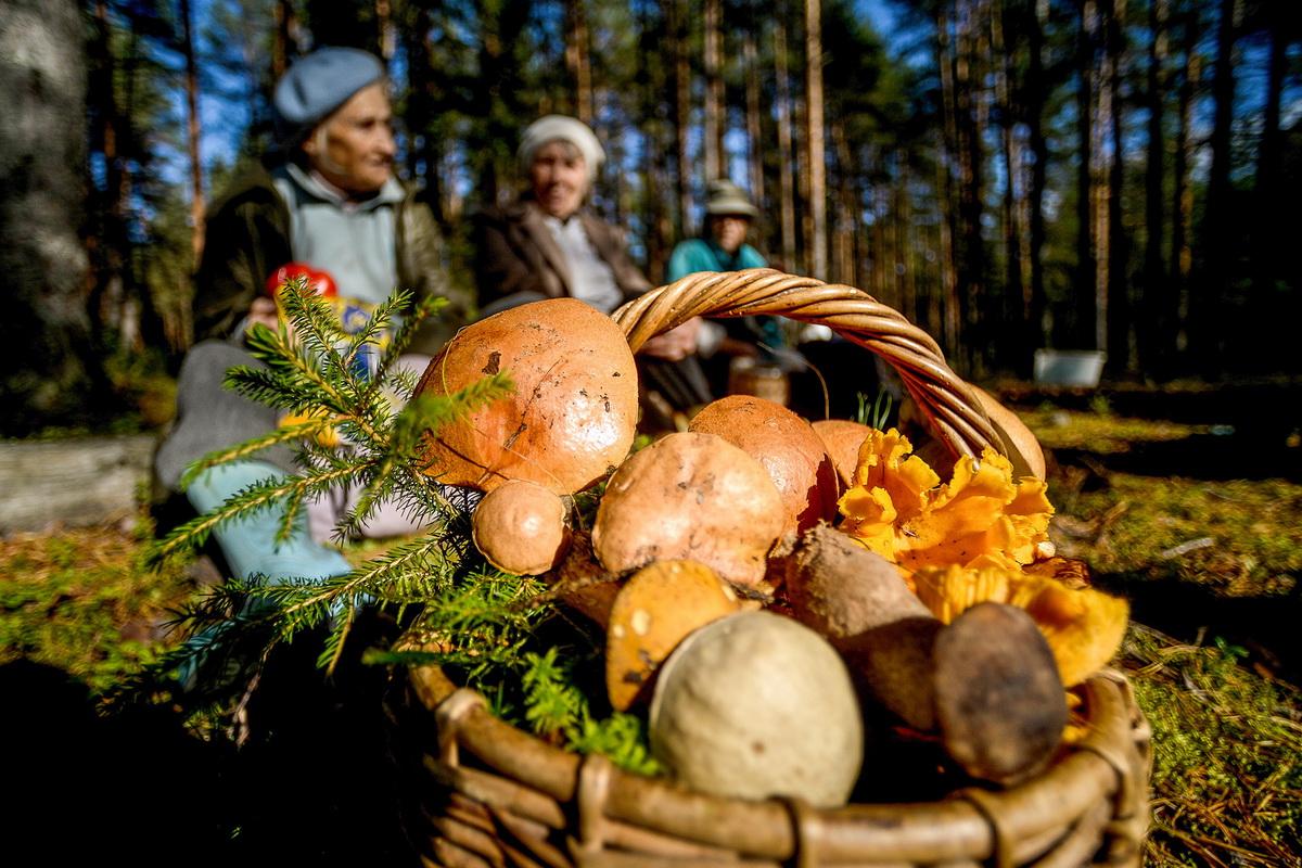 за грибами в Подмосковье