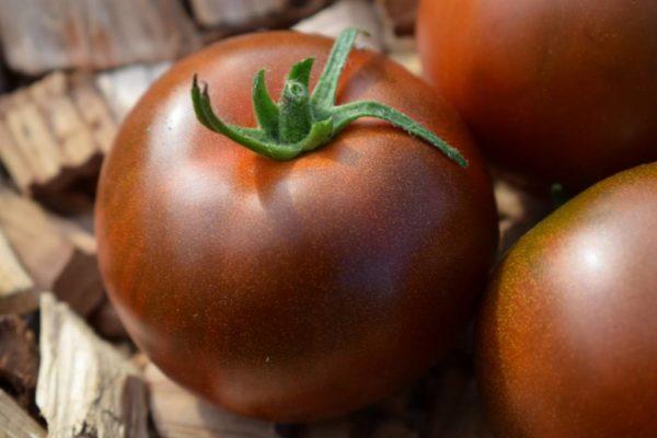 Сорта томатов от коллекционеров