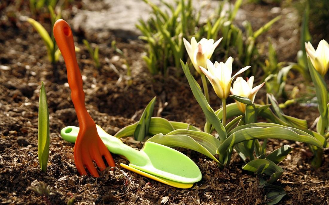 Можно ли предупредить ранее пробуждение растений по причине отсутствия снега