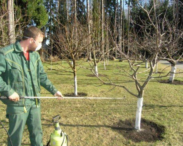 опрыскивание сада ранней весной