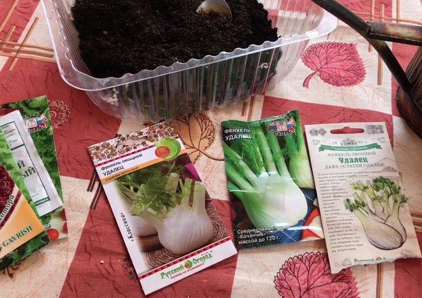 фенхель когда сеять семена на рассаду