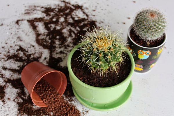 советы по выбору грунта для кактусов и суккулентов