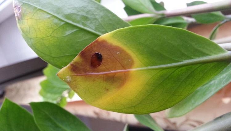 болезнь растения
