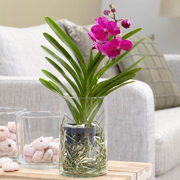 Орхидея ванда: фото цветка